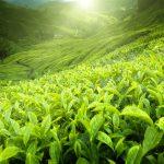Thermakor fat burner review. Natural health